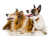 Two dogs look to the left — Stock Photo