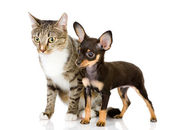 Puppy with a cat — Stock Photo