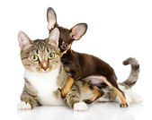 Dog and cat together — Stock Photo