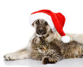 Cat and Dog with Santa Claus hat — Stock Photo