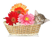 The small kitten sleeps in a basket with flowers — Stock Photo