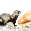 Royalty-Free Stock Photo: Ferret on gray background