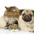 Cat and dog - Foto de Stock  
