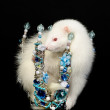 White polecat with a crown — Stock Photo