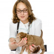 Veterinarian with puppy sharpei dog. — Stockfoto