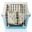 Stock Photo: Kittens in transport box. isolated on white background