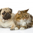 Cat and dog — Stock Photo #19220347