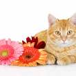 Kitten and flower looking at camera. isolated on white background — Stock Photo