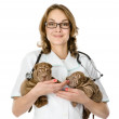 Two puppies sharpei dog on hands at the veterinarian. isolated on white background — Stock Photo