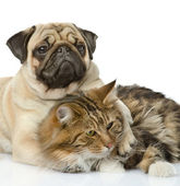 The dog hugs a cat. isolated on white background — Stock Photo