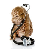 Sharpei puppy dog with a stethoscope on his neck. isolated on white background — Stock Photo