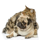 Cat embraces dog — Stock Photo