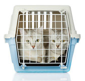 Kittens in transport box. isolated on white background — Stock Photo
