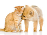 The dog and cat look at each other. isolated on white background — Stock Photo