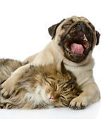 The dog and cat lie together. isolated on white background — Stockfoto