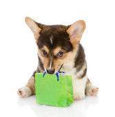 Puppy bearing gift. isolated on white background — Stock Photo