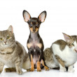 Dog and two cats watchfully look in the camera. isolated on white background — Stock Photo