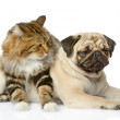 The dog together with  cat. isolated on white background - Stock Photo