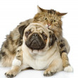 The dog together with cat. isolated on white background — Stock Photo #21882079