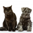 Cat and dog looking at camera. isolated on white background — Stock Photo