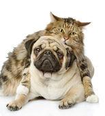 猫と犬。白い背景で隔離 — ストック写真