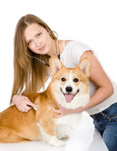 Vet checking the heart rate of a adult Pembroke Welsh Corgi dog. looking at camera. isolated on white background — Stock Photo