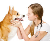 Female veterinarian examining a Pembroke Welsh Corgi dog. isolated on white background — Stock Photo