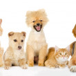 Group of cats and dogs in front. — Stock Photo