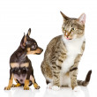 The puppy dog and cat — Stock Photo