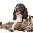The dog embraces a cat — Stock Photo