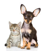 Cat with a dog attentively look in the camera — Stock Photo