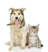 Large dog and kitten — Stock Photo