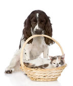 Dog and cat in basket — Stock Photo