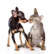 Dog kissing a cat. isolated on white background — Stock Photo