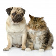 Stock Photo: Cat and dog looking away. isolated on white background
