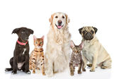 Large group of cats and dogs in front. looking at camera. — Stock Photo