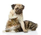 Cachorro pug abraza a un gato. aislado sobre fondo blanco — Foto de Stock
