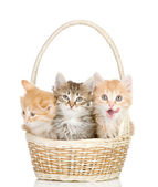 Three small kittens in a basket. isolated on white background — Stock Photo