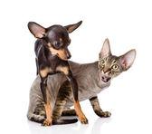 Devon rex kot i Terier szczeniak grać razem. — Zdjęcie stockowe