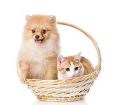 Spitz dog embraces a cat in basket. — Stock Photo