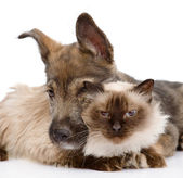Dog embraces a cat. isolated on white background — Stock Photo