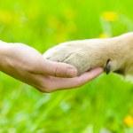 人間間の友情と犬 - 振動の手と足 — ストック写真