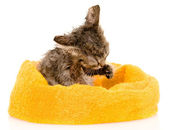 Cute soggy kitten after a bath. isolated on white background — Stock Photo