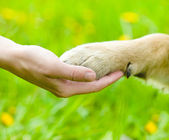 Friendship between human and dog - shaking hand and paw — Stock Photo