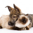 Mixed breed puppy and cat together. isolated on white background — Foto Stock