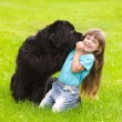 Stock Photo: Newfoundland dog kisses girl