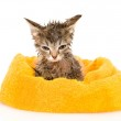 Cute soggy kitten after a bath. — Stock Photo