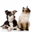 Cat and puppy sitting in front. — Stock Photo