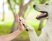 Give me five - Dog pressing his paw against a woman hand — Stock Photo
