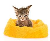 Cute soggy kitten after a bath. — Stock Photo